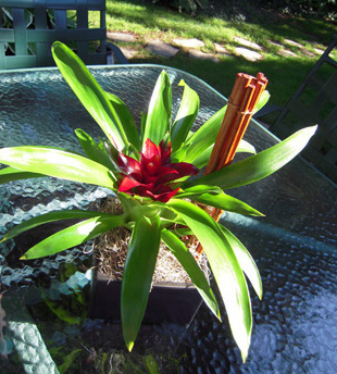 RF0952-Modern Tropical, Red Centerpiece